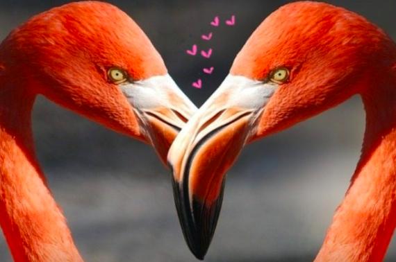 Flamingo Deko Trends!