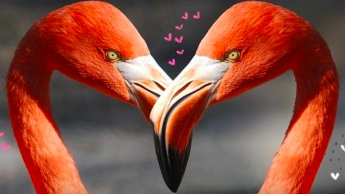 Flamingo Dekoration