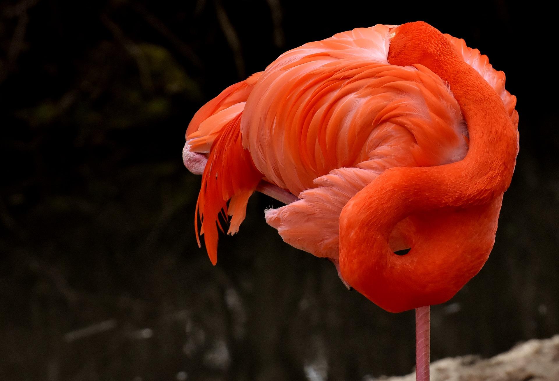 Flamingo Gürtel
