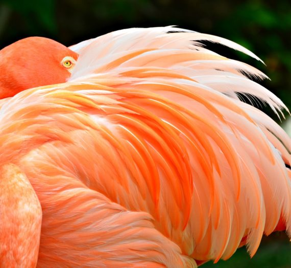 Das beste Flamingo Handtuch finden
