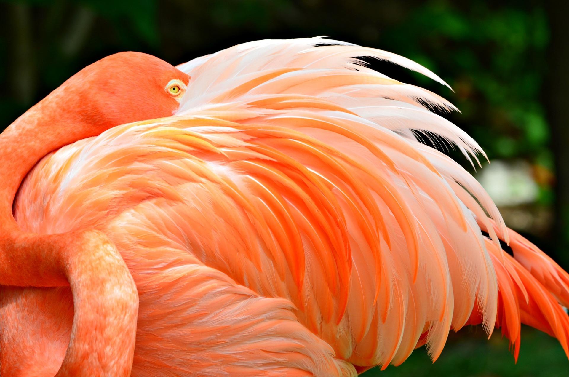 Flamingo Handtuch