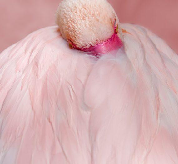 Die beste Flamingo Kissenbezug finden
