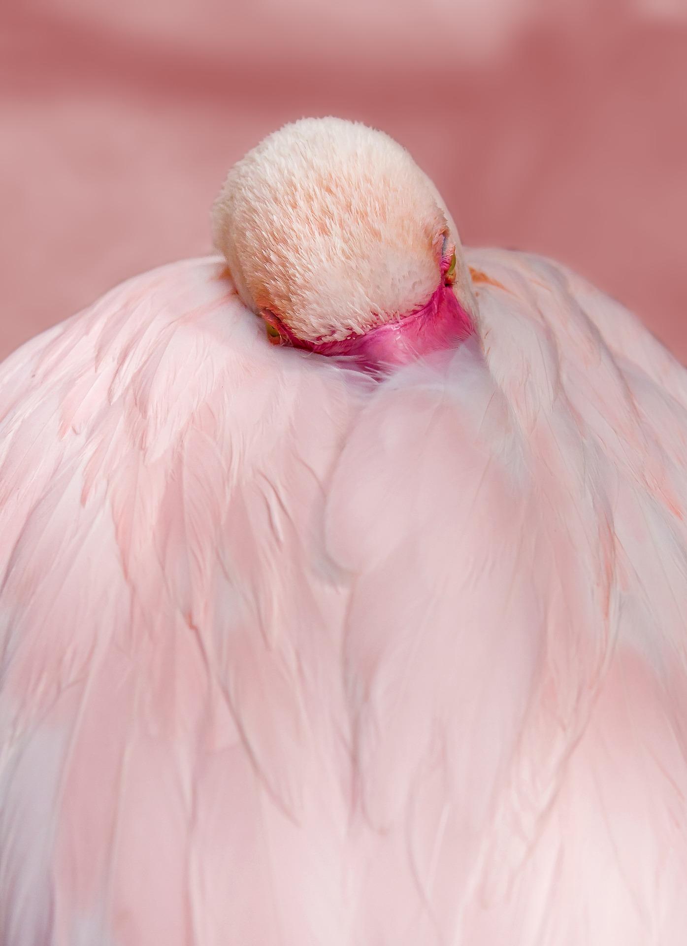 Flamingo Kissenbezug