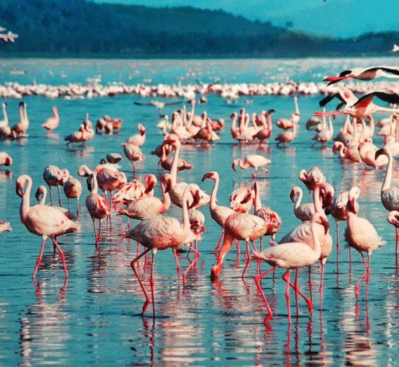 Flamingo Besteck bequem finden