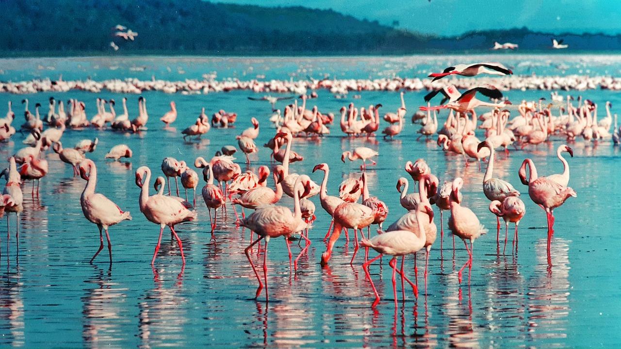 Flamingo Besteck