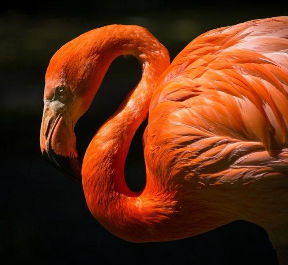 Flamingo Sticker bequem online kaufen