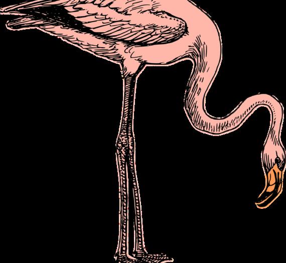 Das beste Flamingo Papier finden