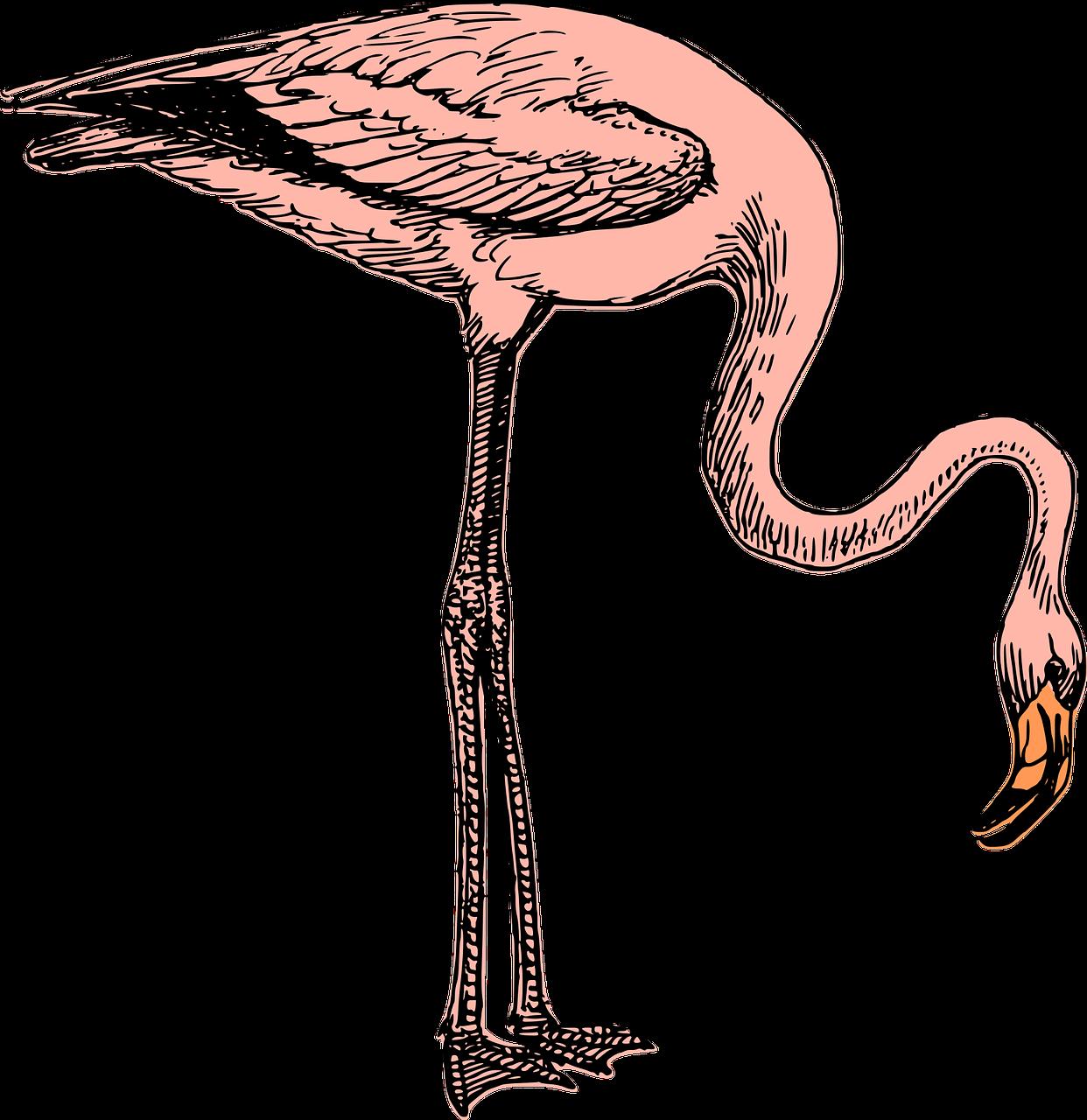 Flamingo Papier