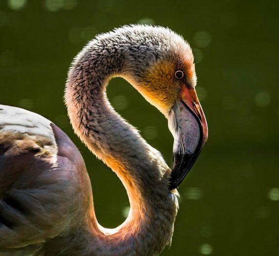 Flamingo Taschen ganz einfach online kaufen