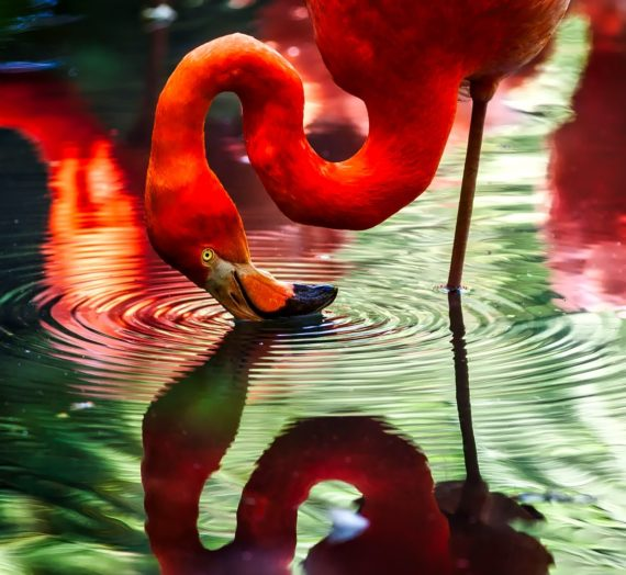Die besten Flamingo Stifte finden