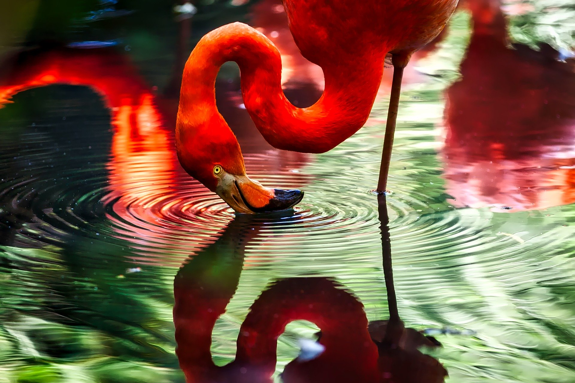 flamingo Stift