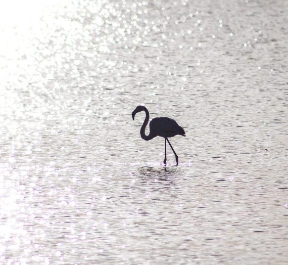 Die beste Flamingo Maske finden