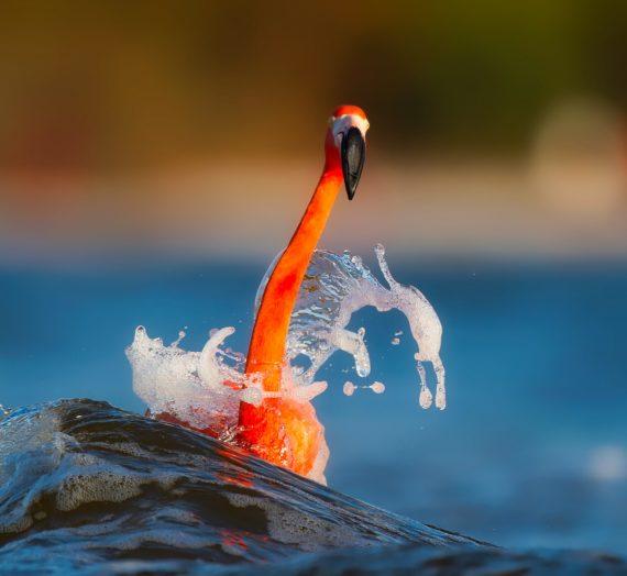 Den besten Flamingo Schal online finden und kaufen