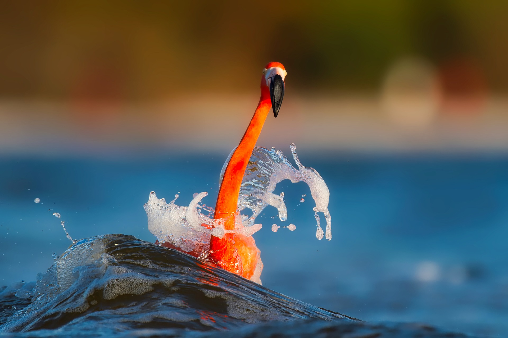 Flamingo Schal