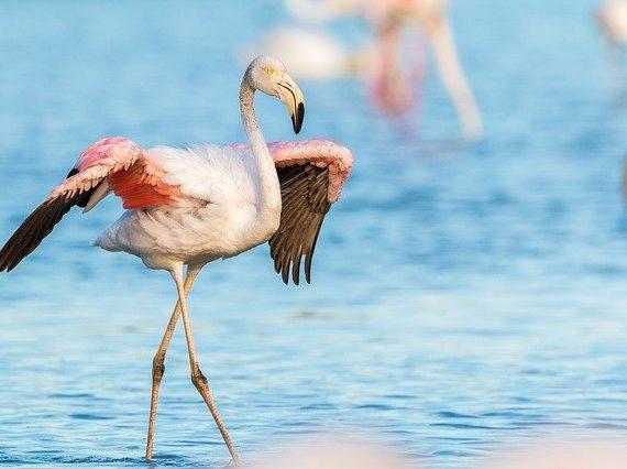 Flamingo Handtaschen online finden
