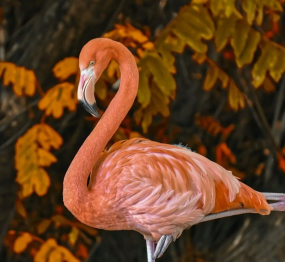 Flamingo Statue online kaufen