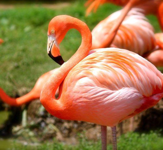 Flamingo Party Deko für deine Party kaufen