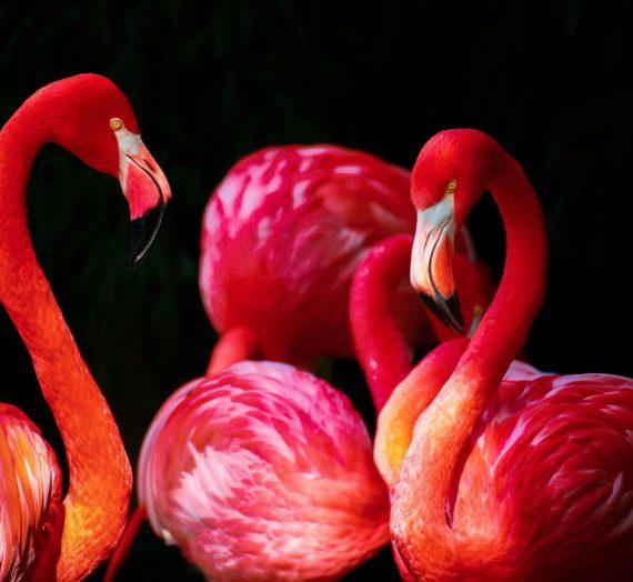 Flamingo Ohrringe – online kaufen