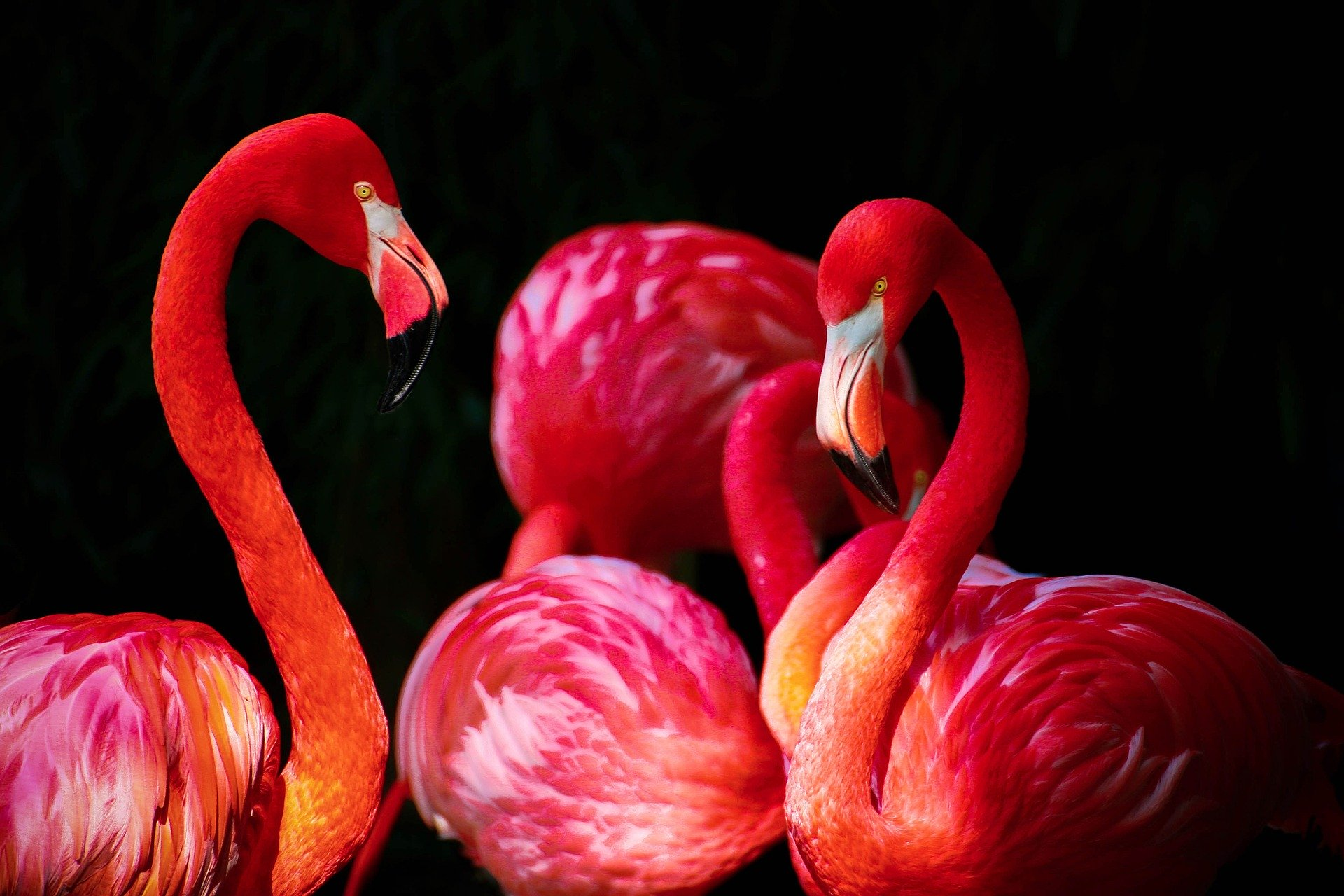 flamingo Thermobecher