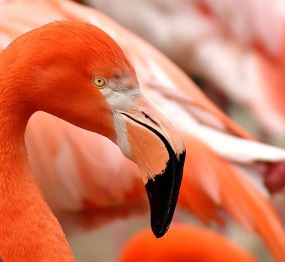 Die besten Flamingo Bilder finden – online kaufen