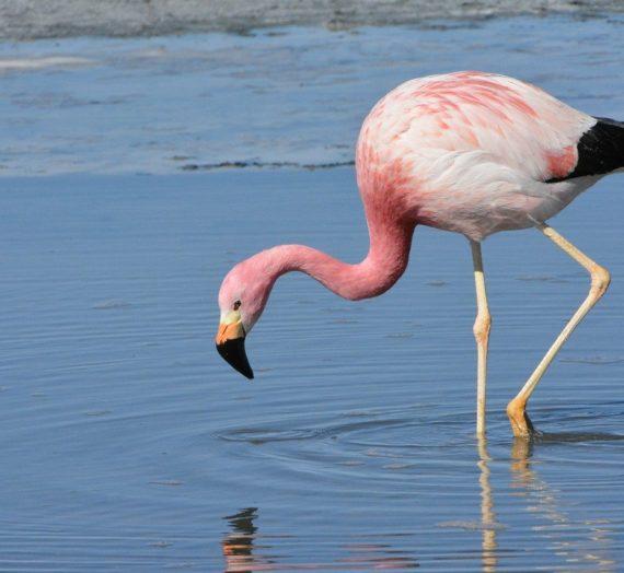 Flamingo Schultüten online kaufen